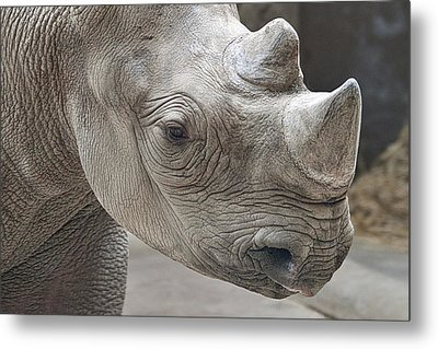 Rhinoceros Metal Print by Tom Mc Nemar