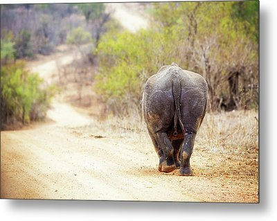 Rhinocerous Walking Away Down Road Metal Print by Susan Schmitz