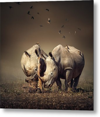 Rhino's With Birds Metal Print