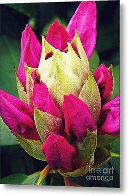 Rhododendron Velvet    Metal Print by Sarah Loft