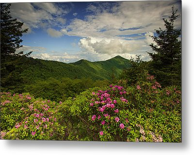 Rhododendrons On The Blue Ridge Parkway Metal Print