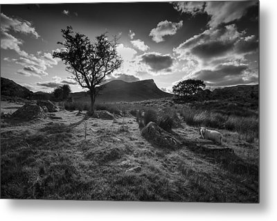 Metal Print featuring the photograph Rhyd Ddu, Snowdonia, Wales by Richard Wiggins