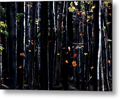 Rhythm Of Leaves Falling Metal Print by Bruce Patrick Smith