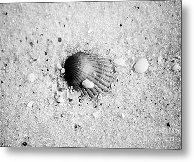 Ribbed Sea Shell Macro Buried In Fine Wet Sand Black And White Metal Print