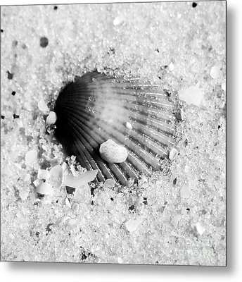 Ribbed Sea Shell Macro Buried In Fine Wet Sand Square Format Black And White Metal Print