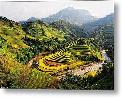 Rice Fields On Terraced In Vietnam Metal Print by Phuong Duy Nguyen