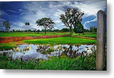 Rice Paddy View Metal Print by Ian Gledhill