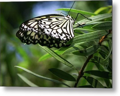 Rice Paper Butterfly - Metal Print