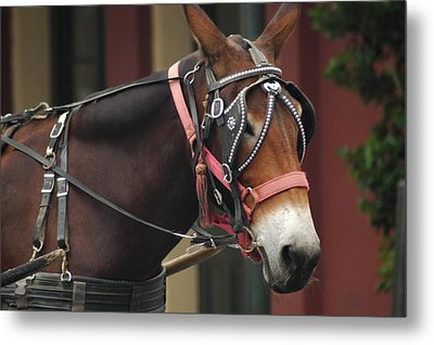Metal Print featuring the photograph Riding New Orleans Style by Lori Mellen-Pagliaro