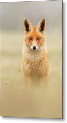 Right Into Your Soul - Red Fox Metal Print by Roeselien Raimond