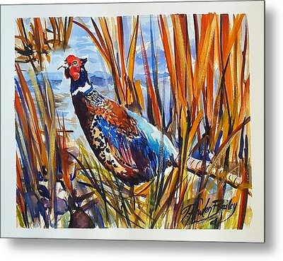 Ring Neck Pheasant By Tfb Metal Print by Therese Fowler-Bailey