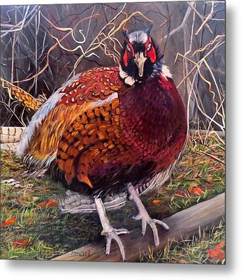 Ring Neck Pheasant Metal Print