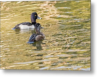 Ring-necked Couple Metal Print by Kate Brown