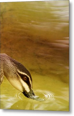 Ripples Metal Print by Holly Kempe