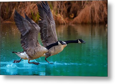 Rise Of Flight Metal Print