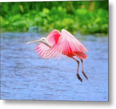 Rise Of The Spoonbill Metal Print by Mark Andrew Thomas