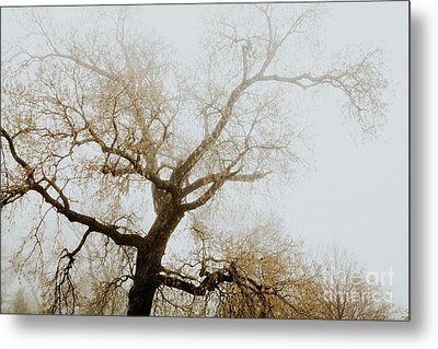 Metal Print featuring the photograph Rising by Iris Greenwell