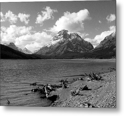 Rising Wolf, Two Med Shoreline Metal Print