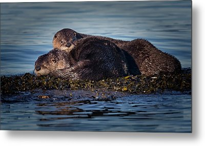 River Otters Metal Print by Randy Hall
