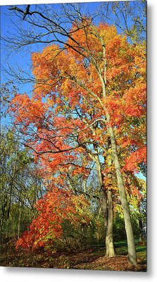 Metal Print featuring the photograph River Road Maples by Ray Mathis