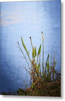 Metal Print featuring the photograph Riverbank Beauty by Carolyn Marshall