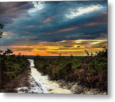 Road Into The Pinelands Metal Print