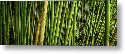 Road To Hana Bamboo Panorama - Maui Hawaii Metal Print