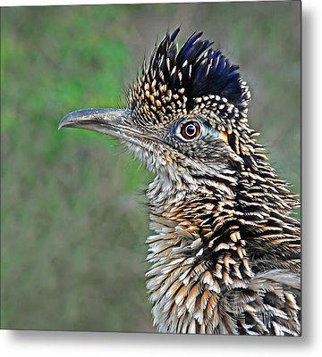 Roadrunner Portrait Metal Print