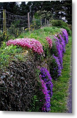 Roadside Beauty In Ireland Metal Print by Jeanette Oberholtzer