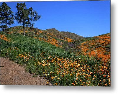 Metal Print featuring the photograph Roadside Color by Cliff Wassmann