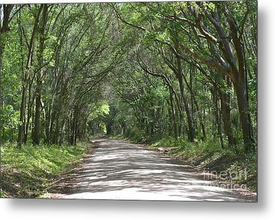 Metal Print featuring the photograph Roadway To Mitchellville Beach by Carol  Bradley