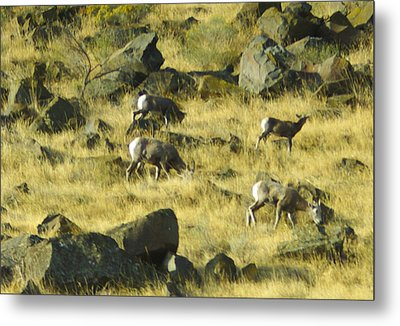 Metal Print featuring the photograph Roaming Free by Dale Stillman