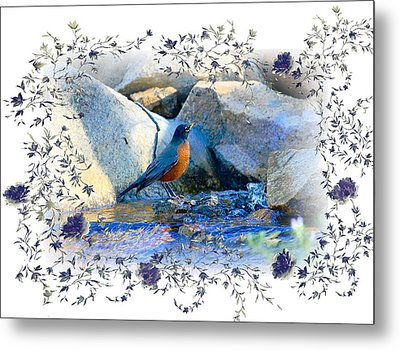 Metal Print featuring the photograph Robin by Athala Carole Bruckner