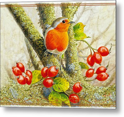 Robin Autumn Metal Print by John Francis