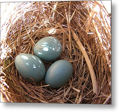 Metal Print featuring the photograph Robin Eggs by Angie Rea