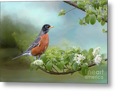 Metal Print featuring the photograph Robin In Chinese Fringe Tree by Bonnie Barry