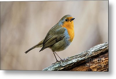 Metal Print featuring the photograph Robin In Spring by Torbjorn Swenelius