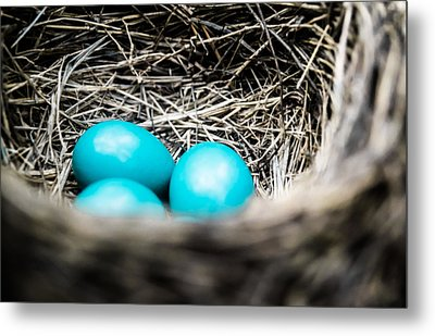 Robin's Eggs Metal Print by Shelby  Young
