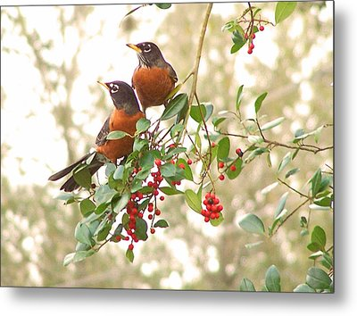 Metal Print featuring the photograph Robins In Holly by Peg Urban