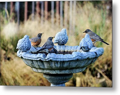 Robins On Birdbath Metal Print by Barbara Rich