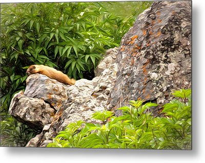 Rock Chuck Metal Print by Lana Trussell
