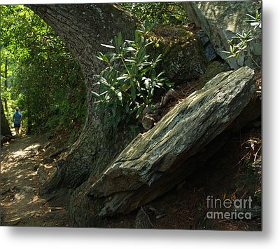 Rocks And Rhododendron At Chimney Rock Metal Print by Anna Lisa Yoder