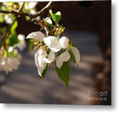 Rocky Mountain Apple Blossoms I Metal Print by Christine S Zipps