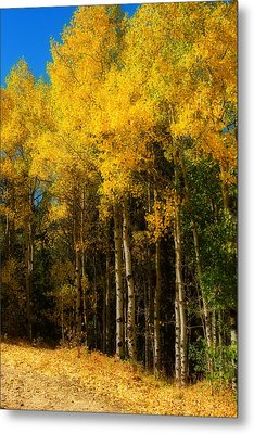 Rocky Mountain Aspen Color Metal Print by James BO  Insogna