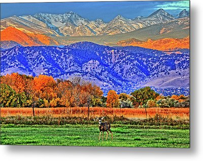 Metal Print featuring the photograph Rocky Mountain Deer by Scott Mahon