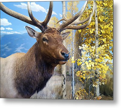 Metal Print featuring the photograph Rocky Mountain Elk by Karon Melillo DeVega