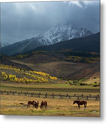 Metal Print featuring the photograph Rocky Mountain Horses by Aaron Spong