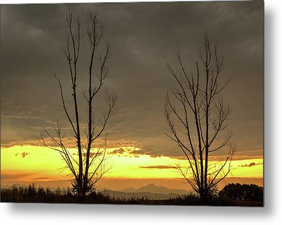 Metal Print featuring the photograph Rocky Mountains Horizon Through The Trees by James BO Insogna