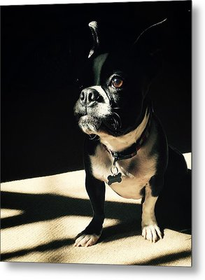 Metal Print featuring the photograph Rocky by Sharon Jones