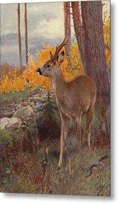 Roe Deer Metal Print by Wilhelm Kuhnert